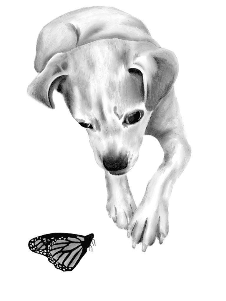 dog pencil drawing on Procreate