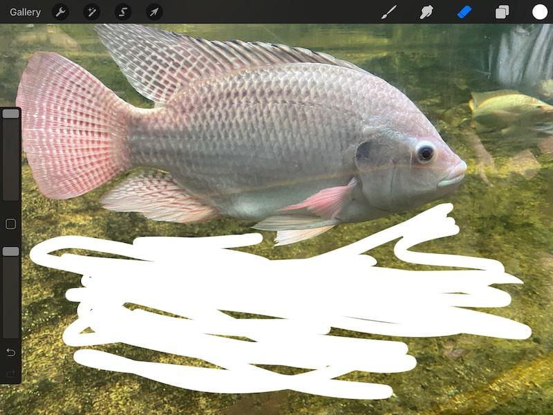 procreate erase background with the eraser